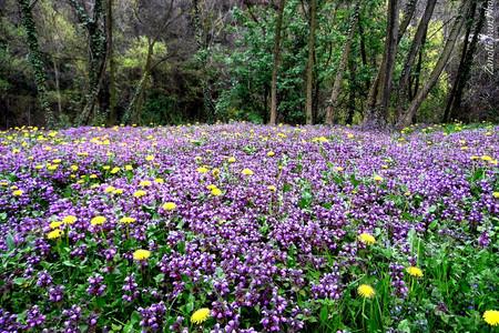Campo di fiori d'ortica in Val Trompia