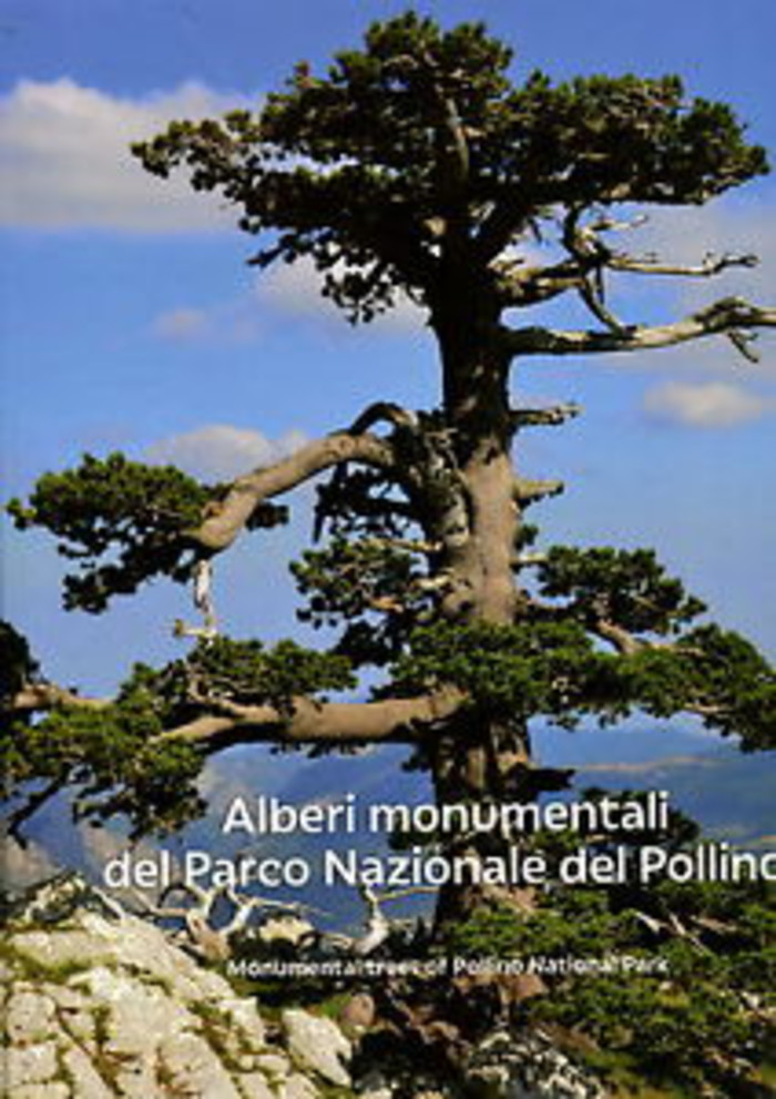 Alberi monumentali del Parco Nazionale del Pollino