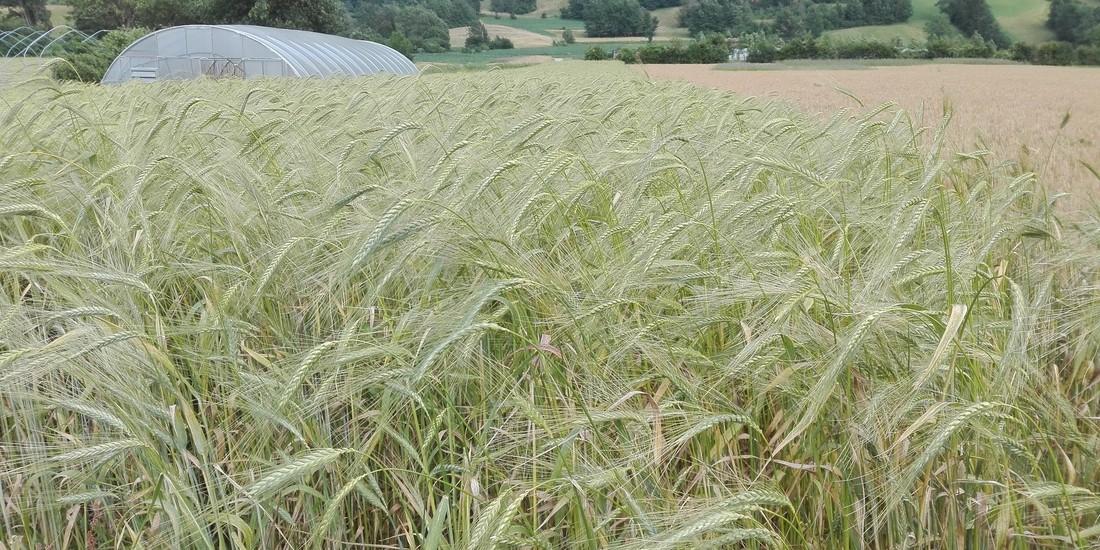 Il pane della filiera del cereale nelle Giudicarie Esteriori