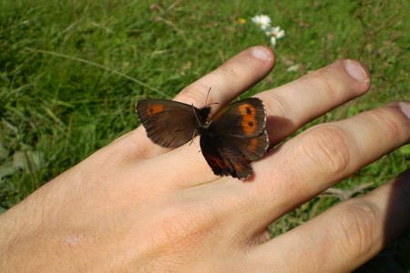 Farfalle, Valle Germanasca in val Chisone, Piemonte