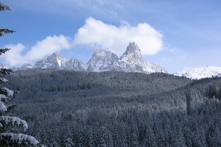 Foresta di paneveggio in inverno
