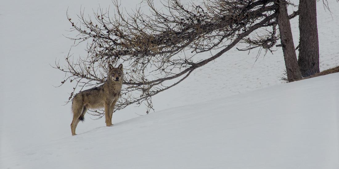 La valle dei lupi