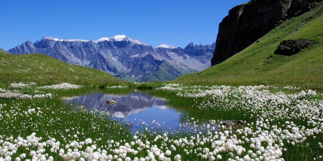 Ecosistema alpino