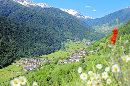 Alpi e boschi comuni, Val di Sole, ph. G. Bernardi