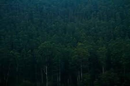 Alpi e boschi comuni