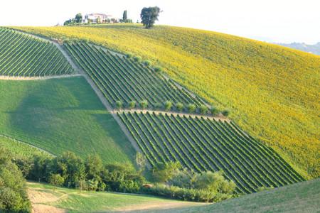 Collina d'Oro, Marche