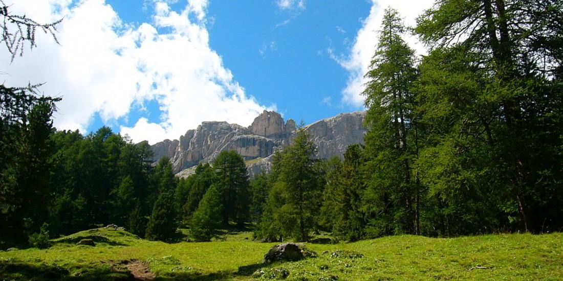 Prato estivo in Val di Fassa