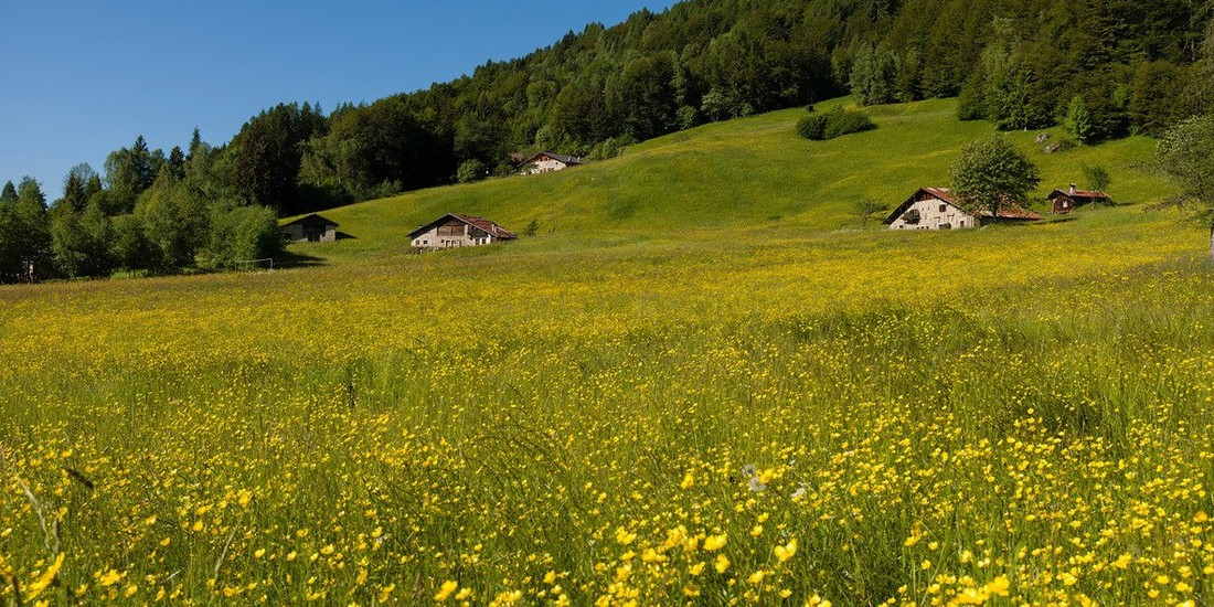 Boniprati, Valle del Chiese, Comunità delle Giudicarie