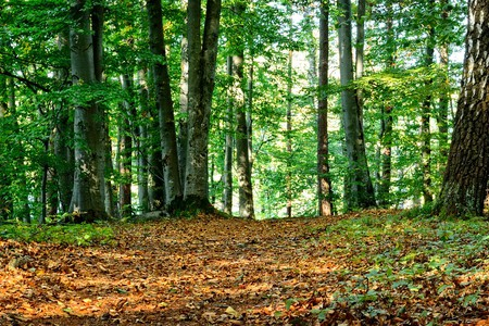 Bosco foresta modello
