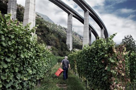 Mostra fotografica Sospensioni, Vigneti sotto i viadotti dell'autostrada in Alta Valle Susa, ph. S. Perolari