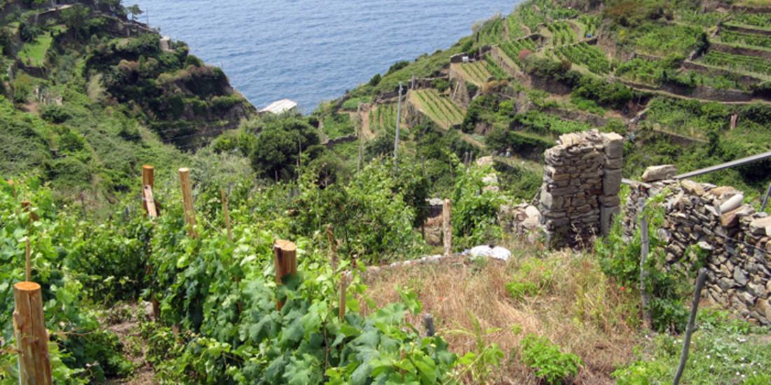 Banca delle Terre Agricole, panorama agricolo delle Cinque Terre