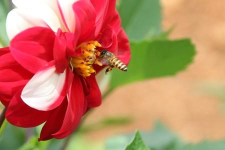 Il miele di Corbezzolo vincitore del Premio Tre Gocce d'oro
