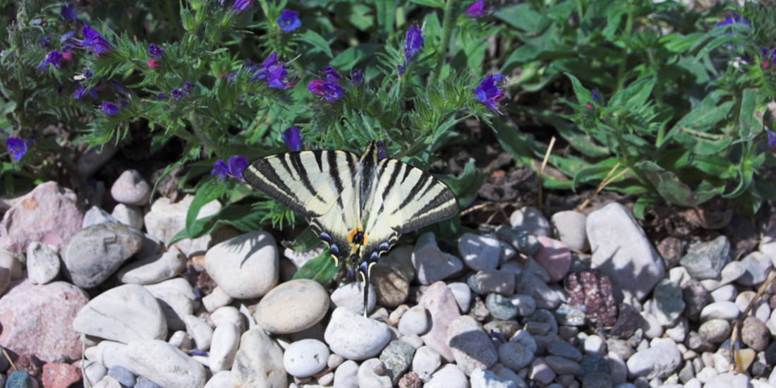 Flora e fauna del Monte Baldo e del Lago di Garda