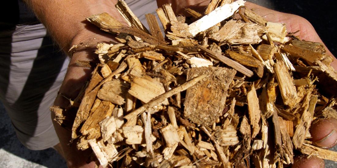 Cippato per centrale a biomassa di Torre Pellice, Valle Pellice, To (foto M. Dematteis)