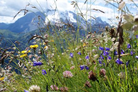 Fiori delle Dolomiti bellunesi