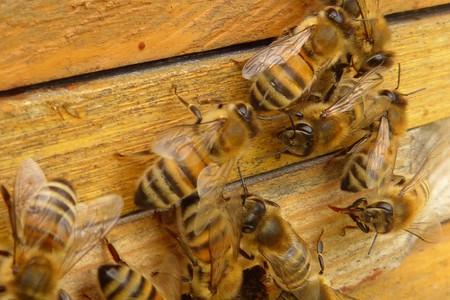 Le api di perdasdefogu