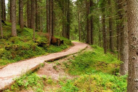 Sentiero Marciò, Parco Naturale Paneveggio Pale di San Martino