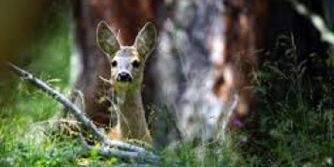 La salvaguardia della Biodiversità