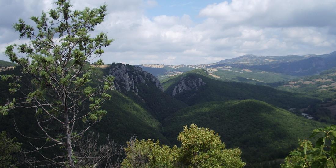 Bosco dei Rocconi, Provincia di Grosseto