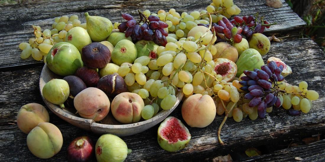 Collezione frutteto Archeologia Arborea