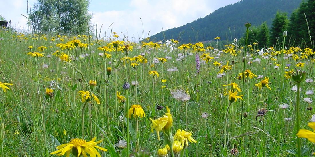 Giardino botanico alpino delle Viote, il Trentino per la Biodiversità